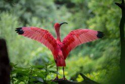 Diamond Painting - Flamingo - 45x30 cm