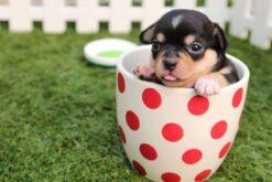 Diamond Painting - Puppy in een beker - 45x30 cm - Volledige bedekking - FULL - SEOS Shop ®