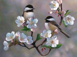Vogels op een bloesem