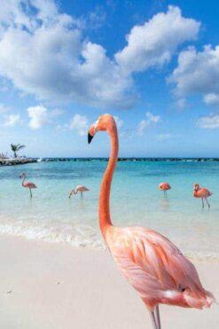 Flamingo's op het strand