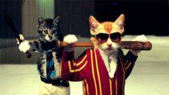 Gave kittens