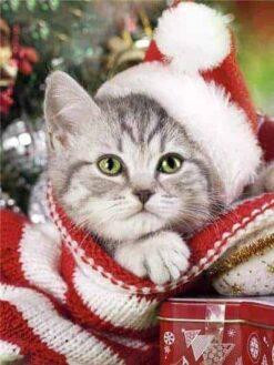Kitten met kerstmuts