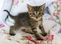 Kitten op bed