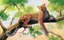 Liggende luipaard