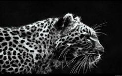 Luipaard zwart wit