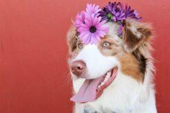 Puppy met bloem op de hoofd