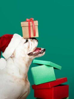 Puppy met cadeau en kerstmuts