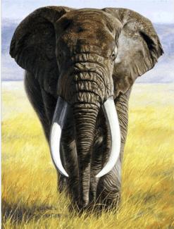 Safari Olifant met slagtanden