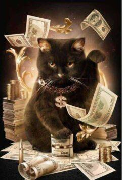 Kat met geld