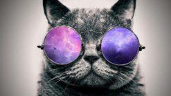 Kat met paarse bril