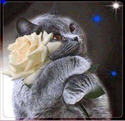Kat met witte roos