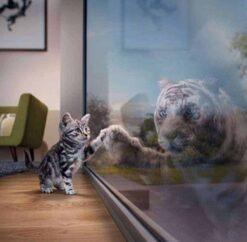 Kitten met Tijger