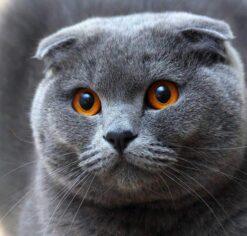 Schattige kijkende kitten