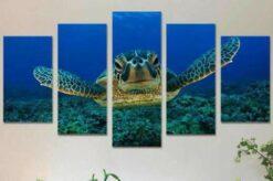Schildpad in de zee 5 luik