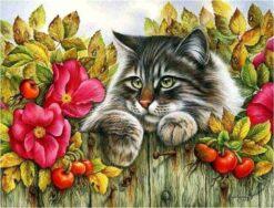 kat op de schutting