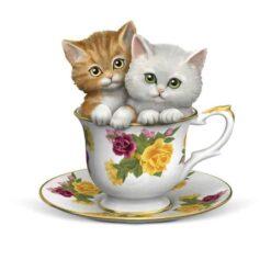 kittens in een theekopje