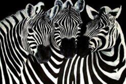 Lieve Zebra's - Dieren Diamond Painting
