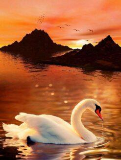 Zwaan bij rode lucht - Dieren Diamond Painting - SEOS Shop ®
